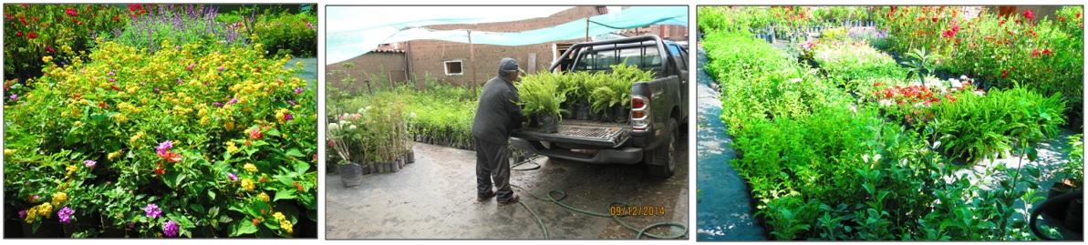 Plantas Ornamentales Cusco
