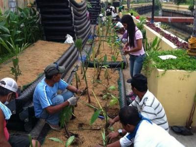 Fascinante proyecto transforma ríos contaminados en jardines flotantes