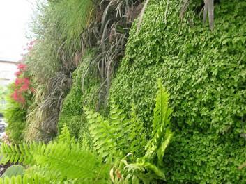 muros-verdes-1